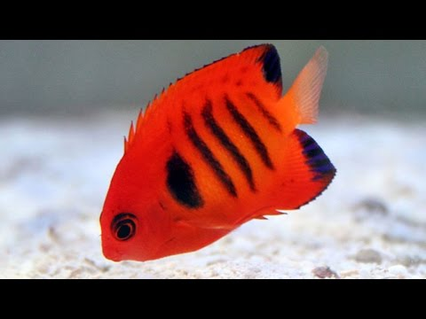 Top 20 Most Beautiful Fishes In The World