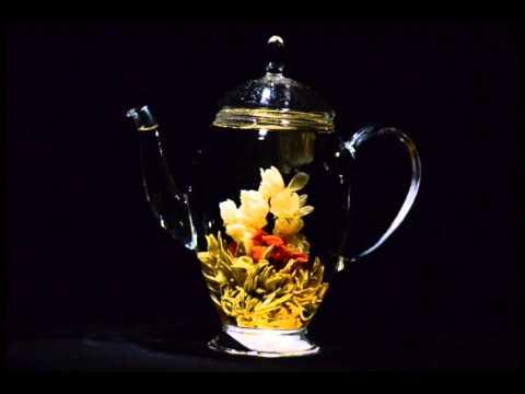 eclosion de la fleur de thé vert : collier de jasmin. - youtube