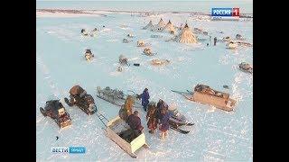 Ямальские оленеводы получат официальный статус и государственную поддержку