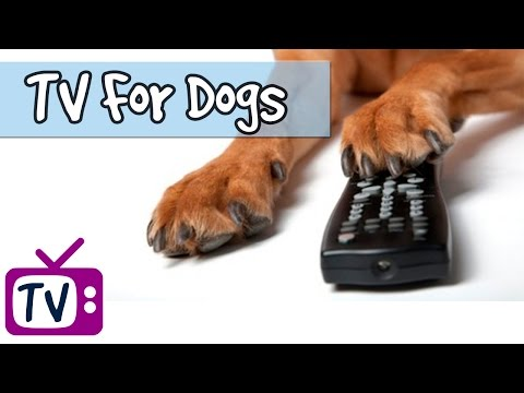 1 Hour of TV for Dogs and Puppies! Keep Your Dog Occupied When You Leave the House with TV on!