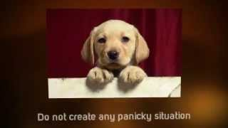 Puppy Potty Training Tips | Tips For House Training a Puppy  | Puppy House Training Tips | Crate