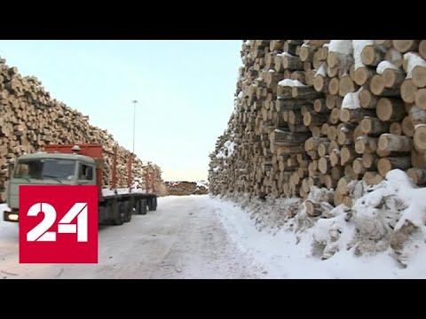 Уничтожение тайги: экологи шокированы масштабом бедствия - Россия 24