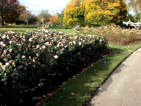 Queen Mary's Garden inside the Regent's Park, London