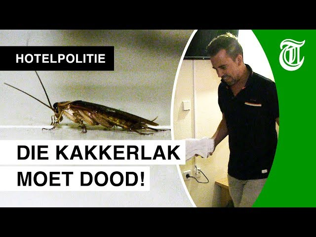 Kakkerlak in vieze hotelkamer Manuel - HOTELPOLITIE #12