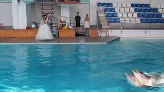 Вальс дельфинов и молодоженов.MOV