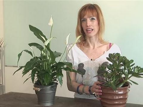 How To Look After Feng Shui Plants