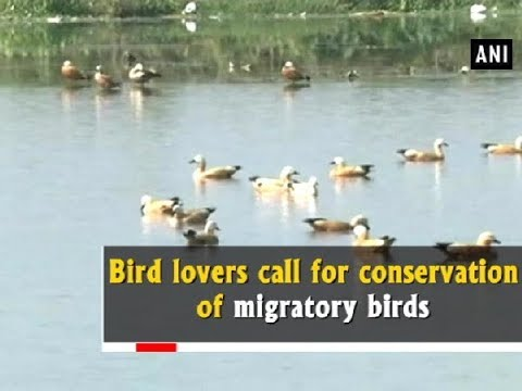 Bird lovers call for conservation of migratory birds - West Bengal News