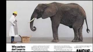 I Am Angus -- Keith Evans and the Elephant Ad
