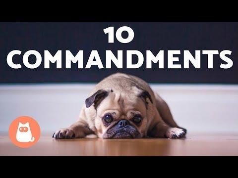 The 10 Dog Commandments Do You Follow Them All?