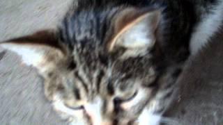 Котик тянется после сна