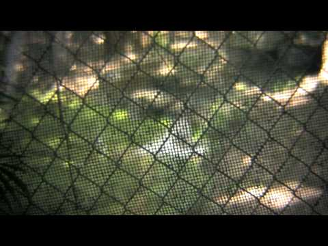 YUMKA ZOO IN TABASCO, MEXICO - STATIC DOF ADAPTER CAMs  with HV30 HD Part 1