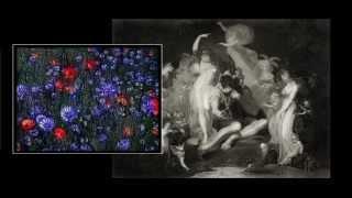 Professor Robert Sapolsky - (Secondary) Theory of Mind 2009