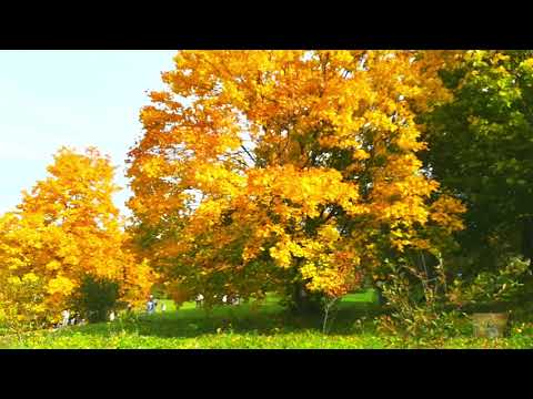 Золотая осень в Болдино. Усадьба Александра Сергеевича Пушкина