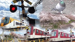 踏切と電車と桜とハトポッポ 近鉄南大阪線の尺土9号と10号踏切道から