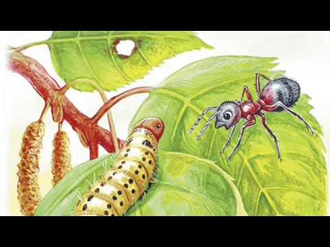 """Приключения муравьишки"", сказка В. Бианки, аудиокнига"