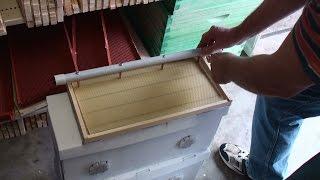 Товары пчеловодам в Австралии(В крупнейшем городе Австралии Сиднее посмотрим товары для пчеловодства в специализированном магазине...., 2016-03-26T19:06:45.000Z)