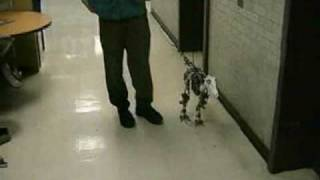 MIT Leg Lab Robots