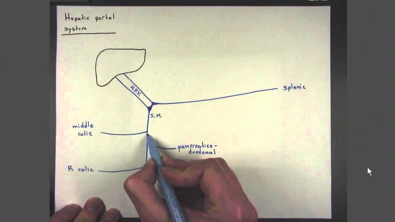 05 Hepatic Portal System Youtube