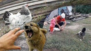 Ночные охотники. Нападение собаки на Браму