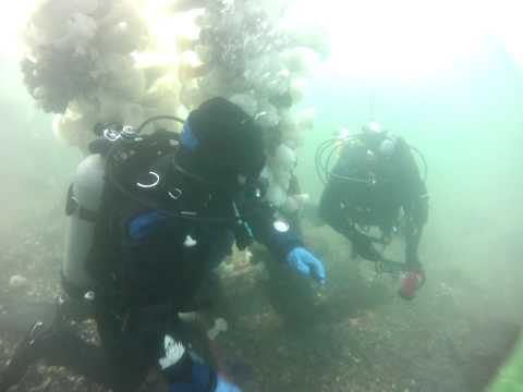 Diving Titlow Beach Tacoma Washington
