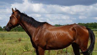 Vlog arrivée de notre nouveau cheval...