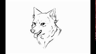 How to draw wolf head in 5 minutes