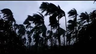 கஜா புயலின் கொடூரத் தாக்கம் - பட்டுக்கோட்டை!! | Gaja Cyclone effect | Pattukkottai | Thanjavur