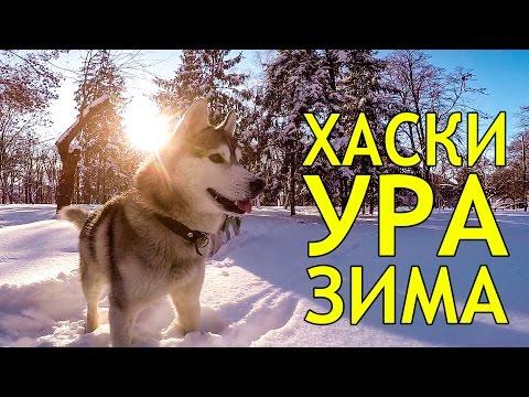 Фильм Дикий пес Севера Скачать