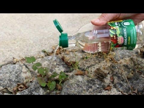 Bestes Hausmittel Gegen Unkraut Best Home Remedy For Weeds Youtube