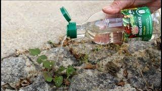 Bestes Hausmittel Gegen Unkraut ! Best Home Remedy For Weeds!
