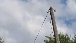 Орел карлик заснял моменты пикирования на голубя.