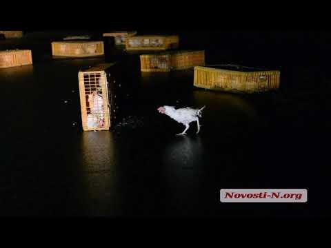 Видео 'Новости-N': Под
