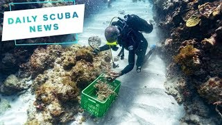 Daily Scuba News - Some Good Coral Reef News!