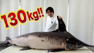 [The largest fish in Kimagure Channel] Filleted 130kg fish and made Sashimi and Shabu-Shabu