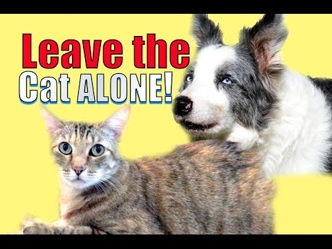How to train your dog to leave your cat alone