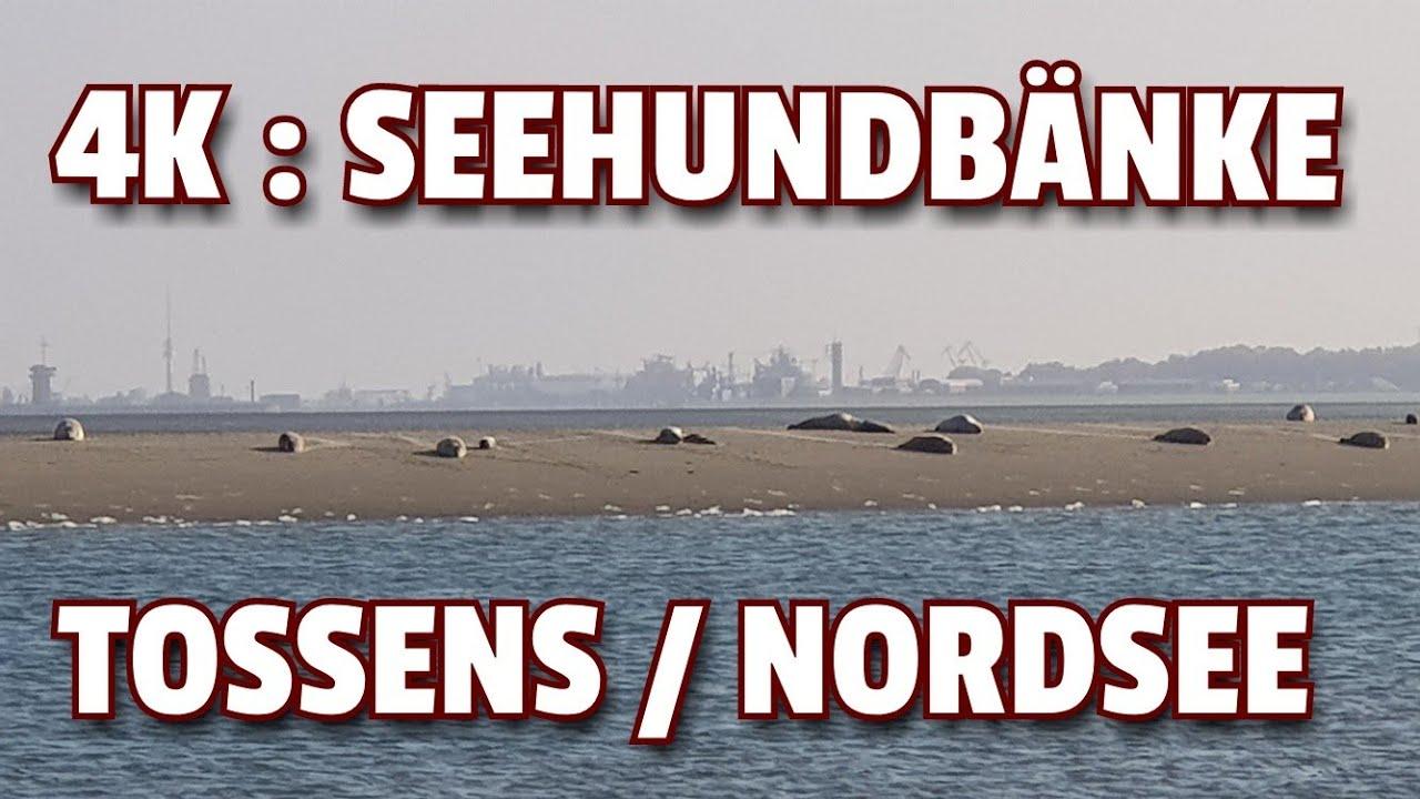✓ 4K: SEEHUNDBÄNKE TOSSENS ☆ NORDSEE - YouTube