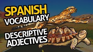 Learn Spanish Vocabulary with OUINO™: Lesson #8 (Description)