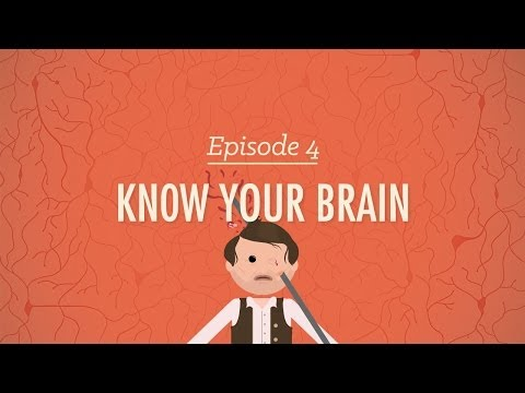 Meet Your Master: Getting to Know Your Brain - Crash Course Psychology #4