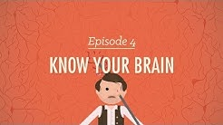 Meet Your Master - Getting to Know Your Brain: Crash Course Psychology #4