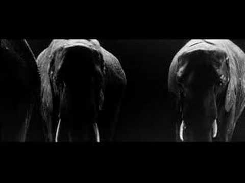 Beginning Of Elephant Man