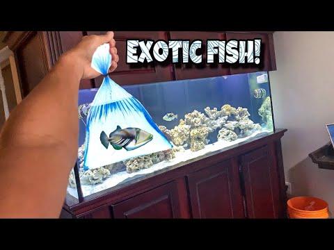 Buying CRAZY TRIGGERFISH For My Aquarium!!