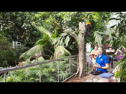 Aviary keeper talks