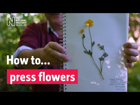 How to press flowers | Natural History Museum