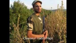 chasse a la tourterelle en tunisie