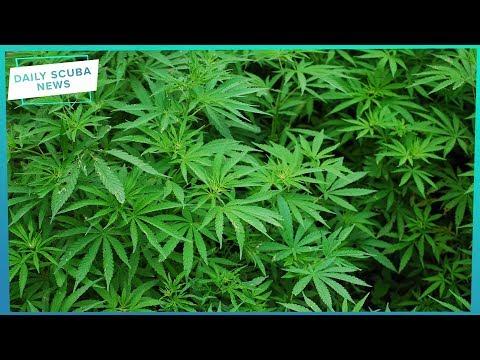 Daily Scuba News - Cannabis And Scuba Don't Mix?!