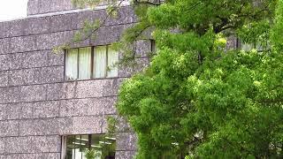 自由民権運動の指導者板垣退助は高知城追手門を入り高知城を見上げる場...