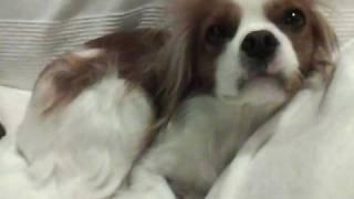 iPod nanoで最初に撮影した動画です。愛犬が眠たそうにしていたのですが...