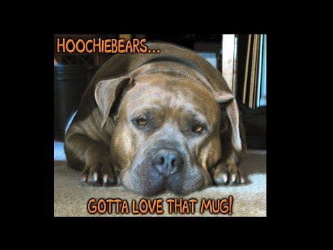 u got the hooch! staffordshire bull terrier. hoochiebears... gotta love that mug!