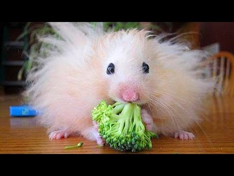 Super fun and humorous ANIMAL videos #7 - Funny animal compilation - Watch & laugh!