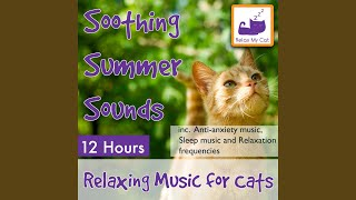 Healing Music for Poorly or Injured Cats